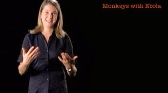 Eva Vertes: Monkeys with Ebola
