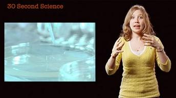 Mollie Woodworth: 30 Second Science image