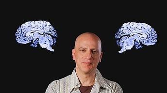 Dave Sulzer: Neuroscientist