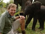 Sex in the Wild | Elephants