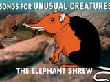 Songs for Unusual Creatures | Elephant Shrew