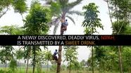 Sweet Drink, Deadly Disease
