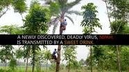 Sweet Drink, Deadly Disease