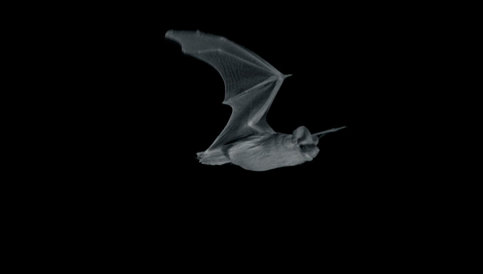 Bat vs Moth: A Nighttime Arms Race