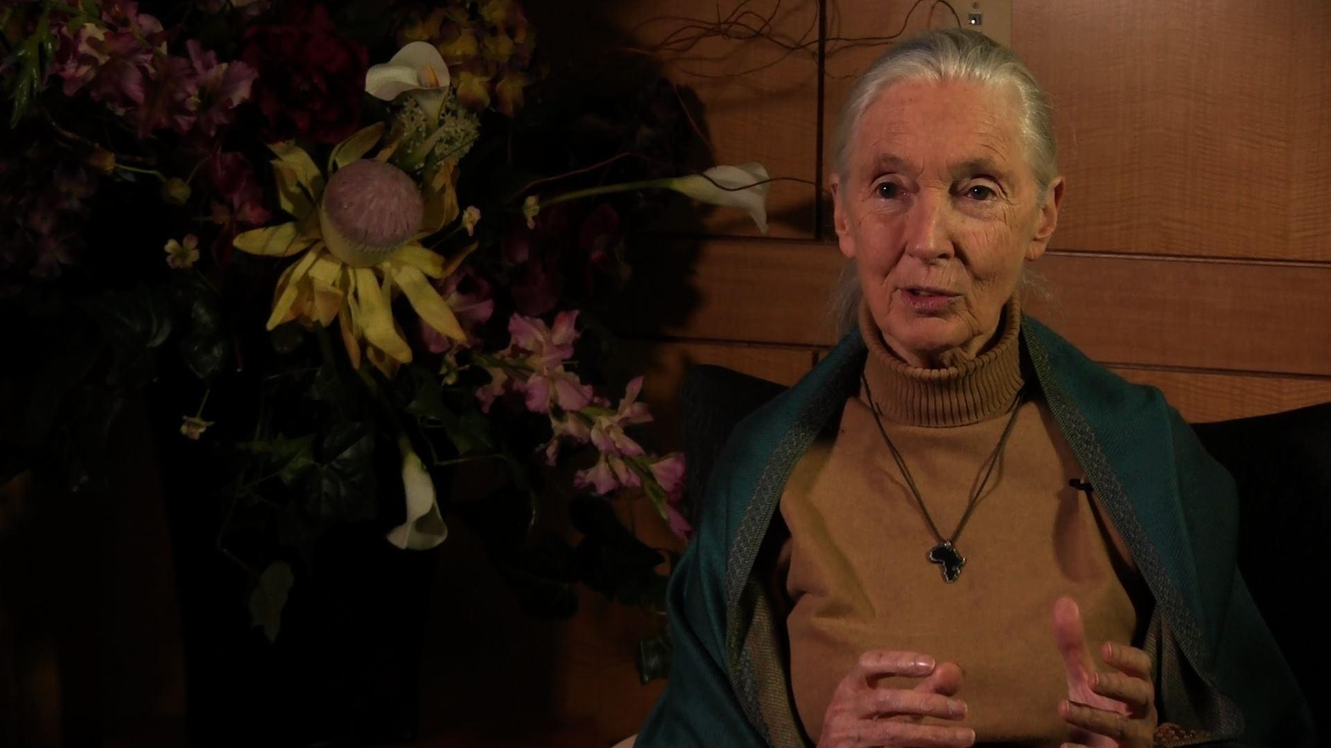 Women's History Month Profile:  Jane Goodall