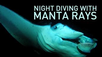 Night Diving with Manta Rays