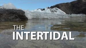 The Intertidal