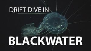 Blackwater Drift Dive