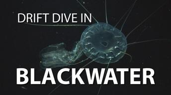Blackwater Drift Dive