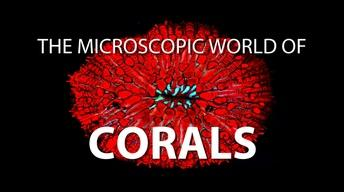 The Microscopic World of Corals