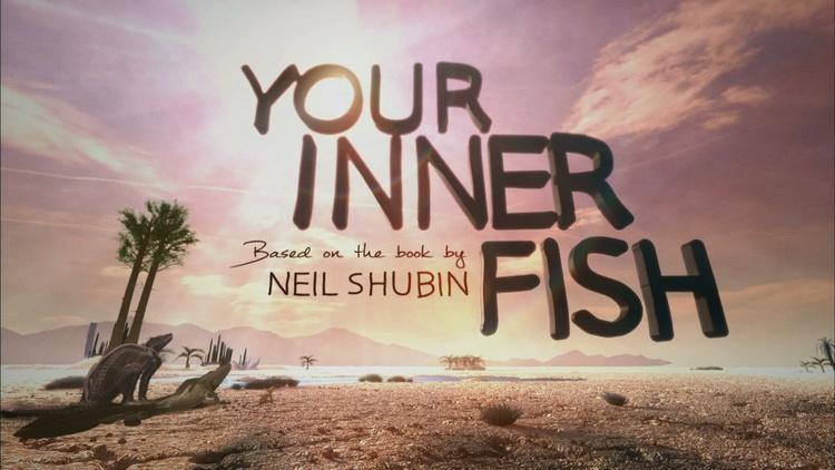 your inner fish What does shubin mean by the phrase your inner fish how do vestigial or maladaptive features enhance his message.
