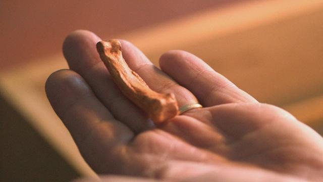 Ancient Hands, Ancient Tools
