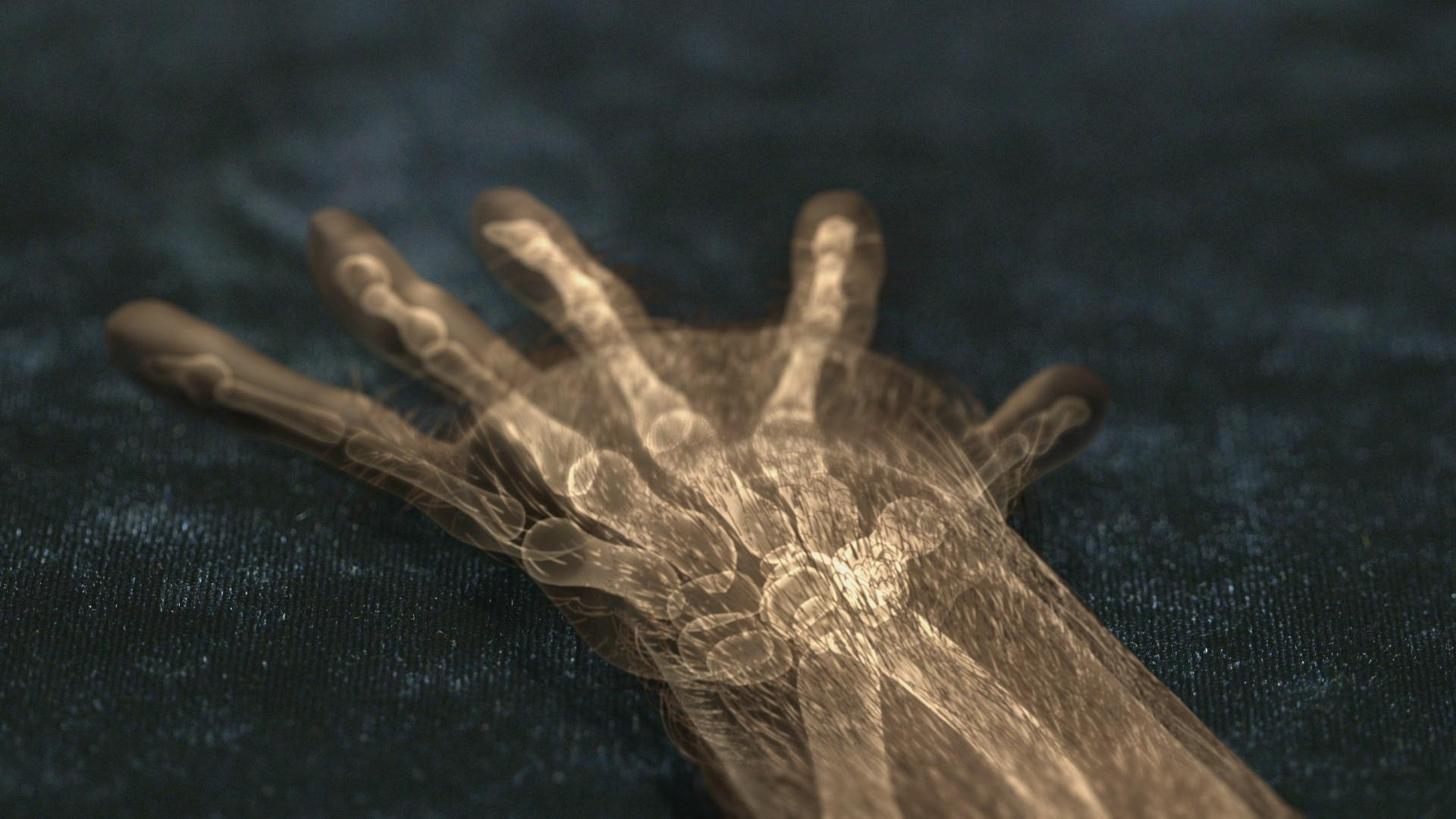 The human hand a gift from ancient primates your inner for Your inner fish
