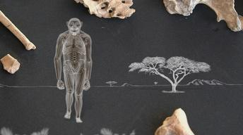 Amazing Places, Amazing Fossils: Lucy