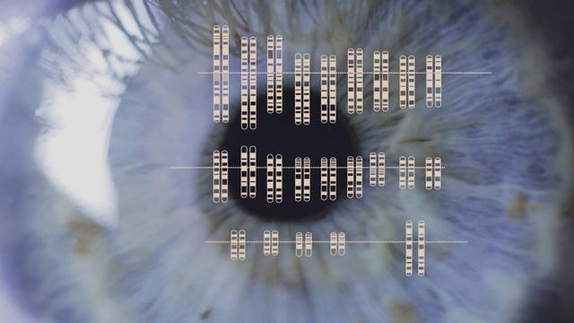 Finding the Origins of Human Color Vision