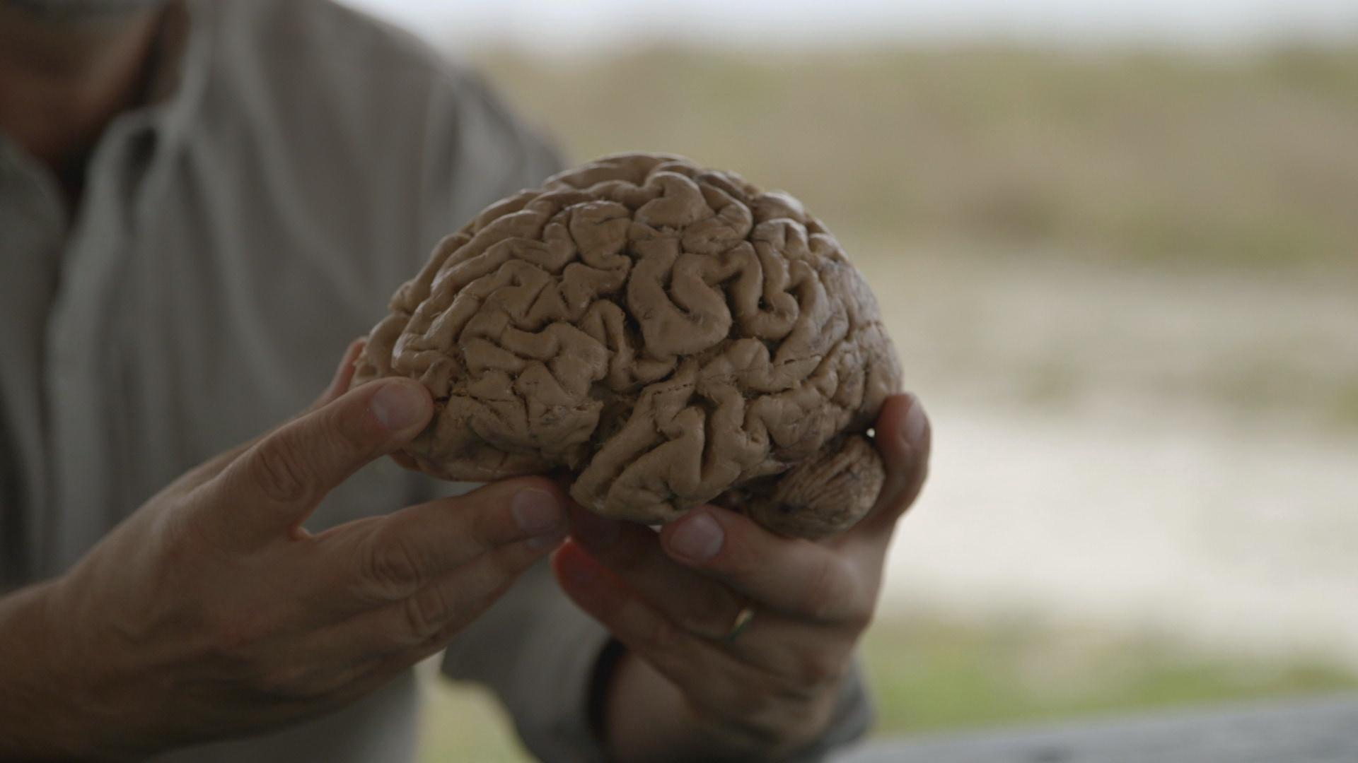 The 500 million year history of the human brain your for Your inner fish