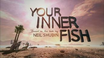 Your Inner Fish: Series Promo image