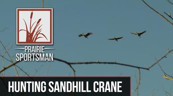 Hunting Sandhill Crane