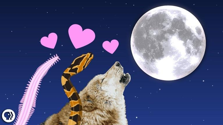 It's Okay to Be Smart: The Romantic Lure of Moonlight