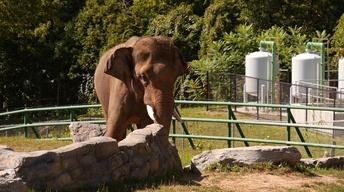 501: Zoo Technology