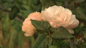 Botany - Idaho Botanical Garden Tour