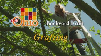Backyard Fruit - Grafting
