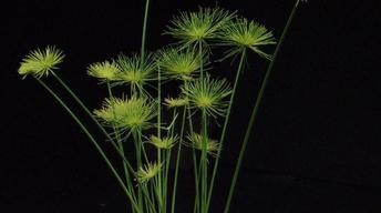 Eye-Popping Pond Plants