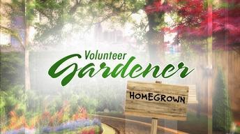 Volunteer Gardener | Home Grown