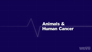 Animals & Human Cancer