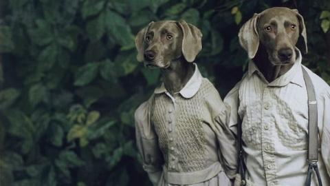 PBS NewsHour -- Artist William Wegman and his Weimaraner muses