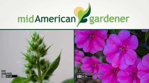 Mid-American Gardener with Mike Brunk May 4, 2017