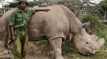S36 Ep11: The Last Rhino