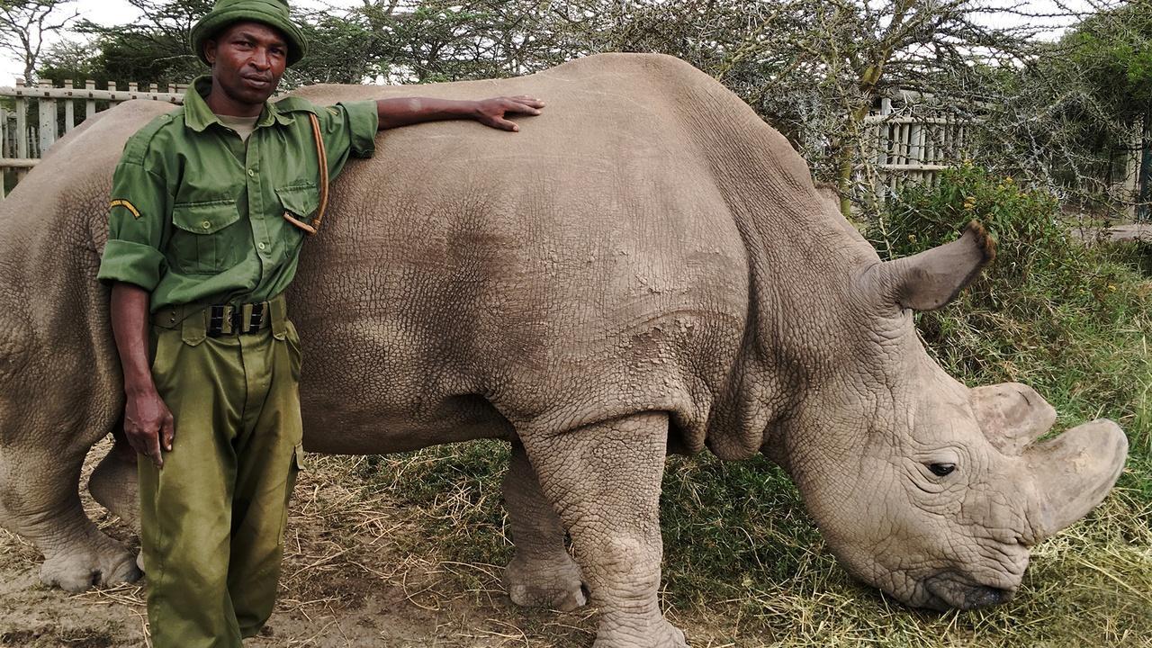 Nature | The Last Rhino