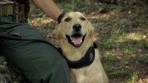 Canine Wardens, Trailer Camera & Grasslands Sunset