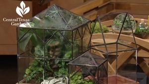 Terrariums Indoors & Drought Tough Design Outside