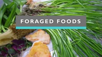 Foraged Foods