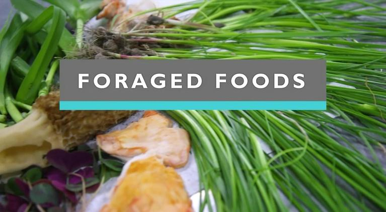 Feast TV: Foraged Foods