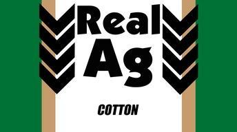 RealAg Cotton (Ep 611)