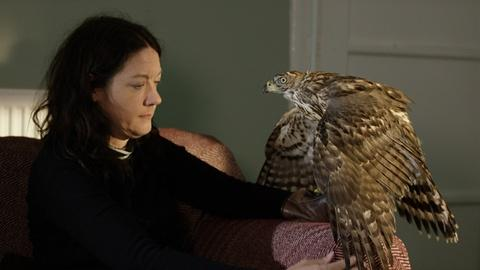 Nature -- S36 Ep4: First Meeting Between Helen Macdonald and Goshawk '