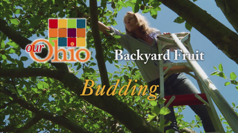 Backyard Fruit - Budding