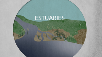Why estuaries are hotspots of biodiversity