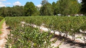 Florida's Agriculture