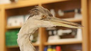 Lenoir-Rhyne tracks herons with Fitbit-like technology
