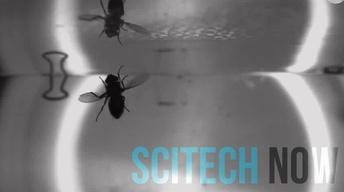 503: SciTech Now 10/19/17