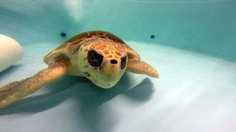 The Turtle Ladies of Charleston County