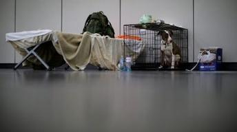 Houston crafts plan for sheltering pets during a crisis