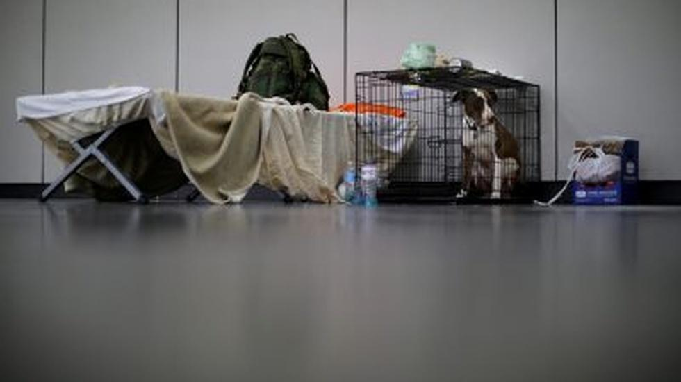 Houston crafts plan for sheltering pets during a crisis image