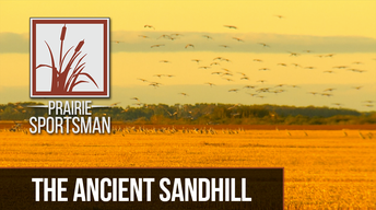 The Ancient Sandhill