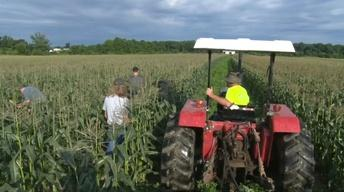 A look inside the Jersey sweet corn business