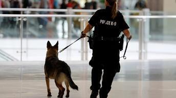 How police protect K-9 partners from opioid overdoses